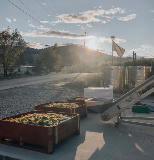 Lariana cellars harvest19 viognier bins sunrise